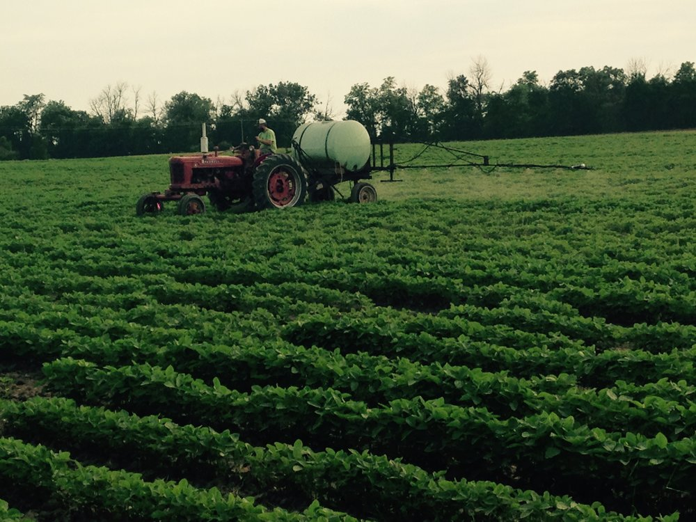 We acquired a sprayer from a very kind extended family member the summer of 2017 and were able to fertilize some of our soybeans and our alfalfa field. We have been using a fish based fertilizer, which doesn't smell too great, but at least you know you are breathing in something organic instead of the chemicals you usually smell when driving through farm country in the summer. -