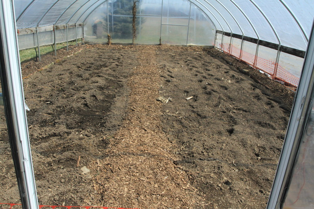 The little high tunnel ready for plants - cauliflower, broccoli and kale are in!