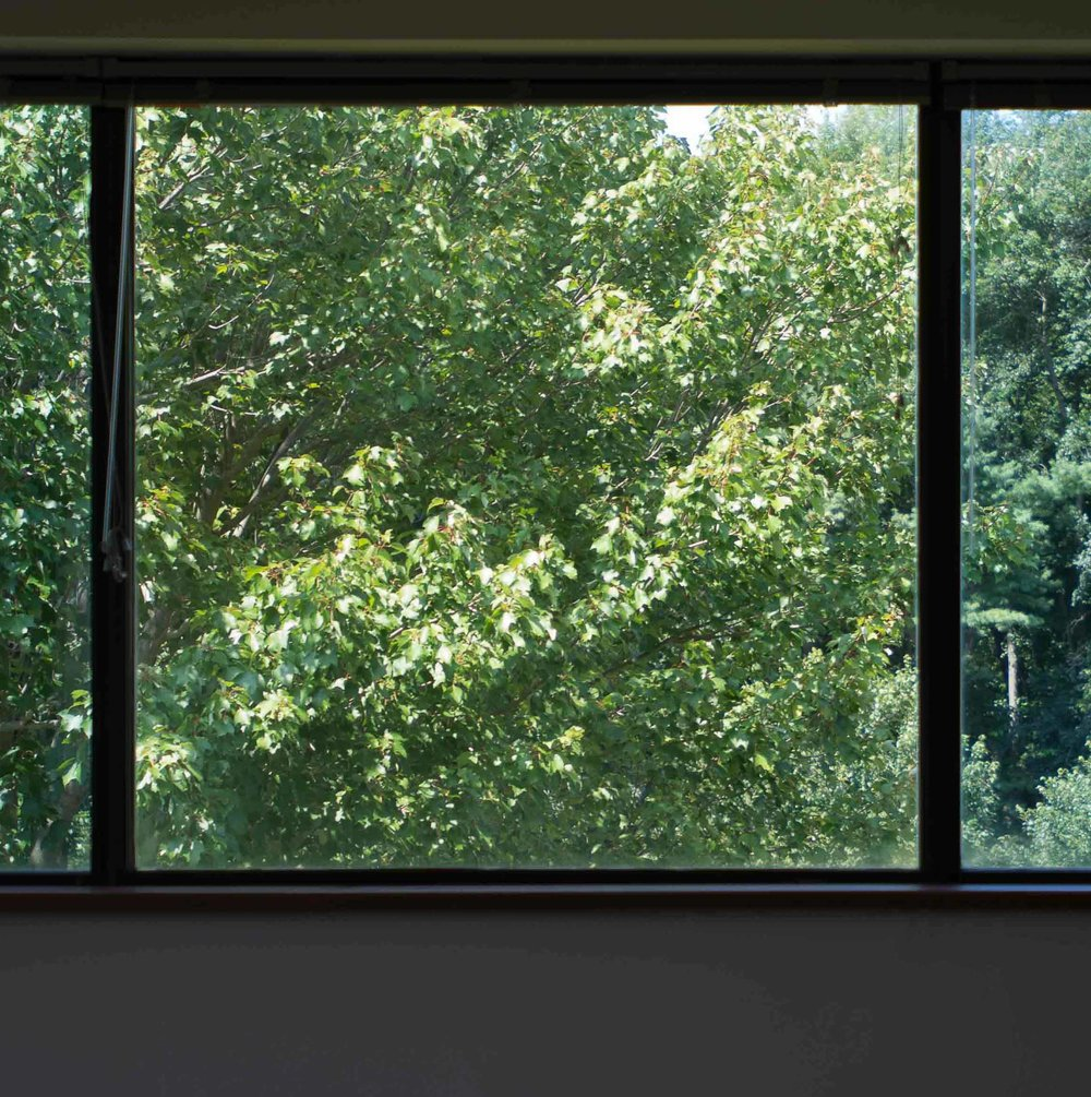 Beautiful Natural Window Views