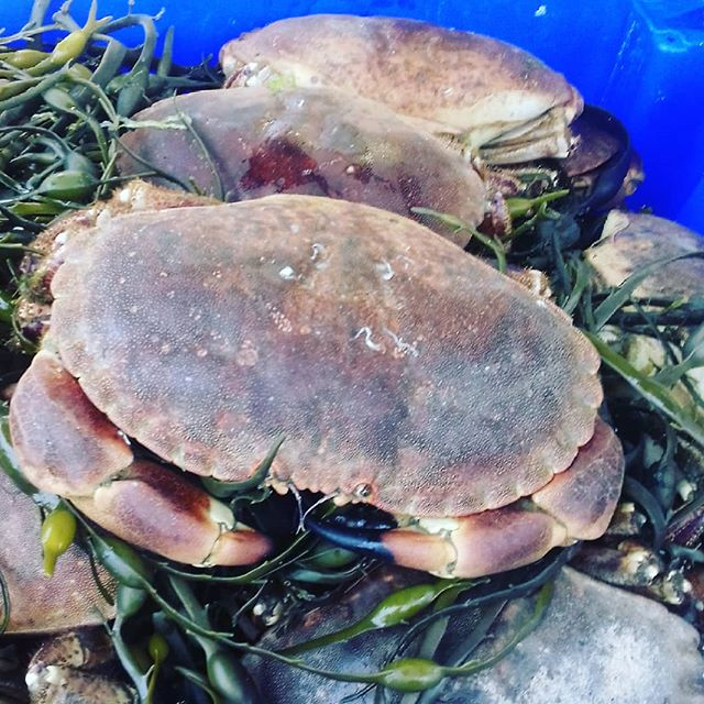 Winking at me .....@gannetfish 🐟🐠on Saturday mornings! #galwaymarket #crab #fresh #summer #shopping