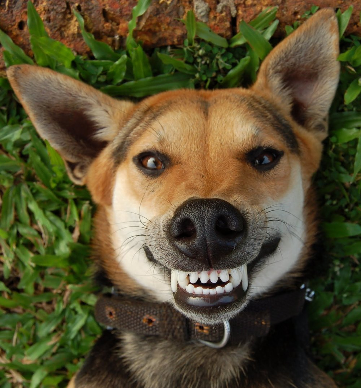 Smile! -
