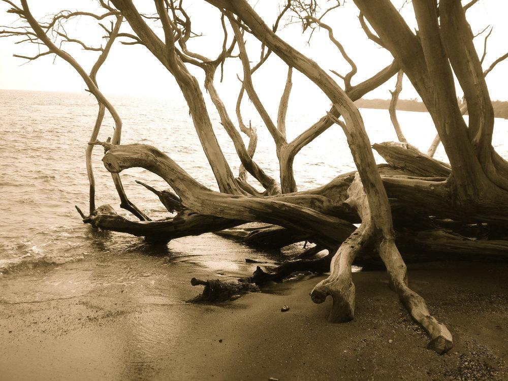 Tree meets ocean.