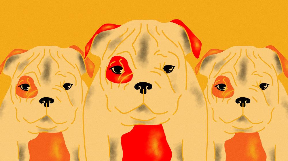 1498584968447-cloned_pup.jpeg