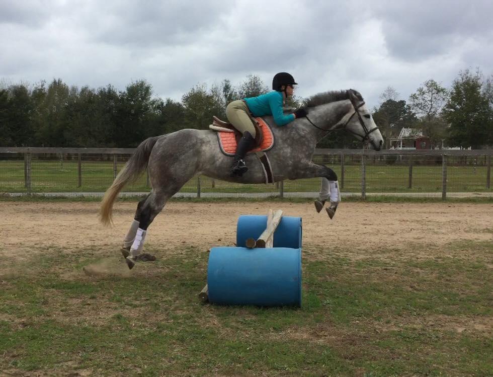 Sunriser Stables Horse Riding Lessons Hunter Jumper - Ellen Morris