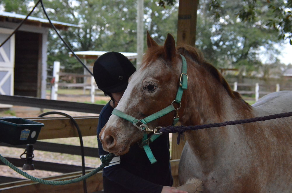 Sunriser Stables - Pensacola FL - English Horseback Riding Lessons - Hunter Jumper Stable and Barn (11).JPG