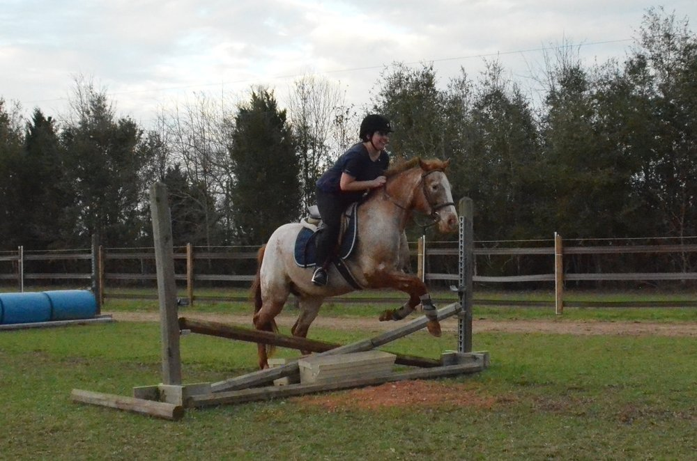 Sunriser Stables - Pensacola FL - English Horseback Riding Lessons - Hunter Jumper Stable and Barn (52).JPG