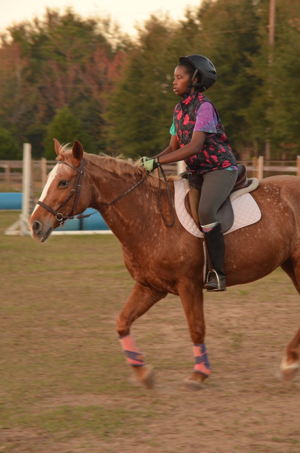 Sunriser Stables - Riding Lessons in Pensacola FL - English Horse Riding Barn and Stable (4).JPG
