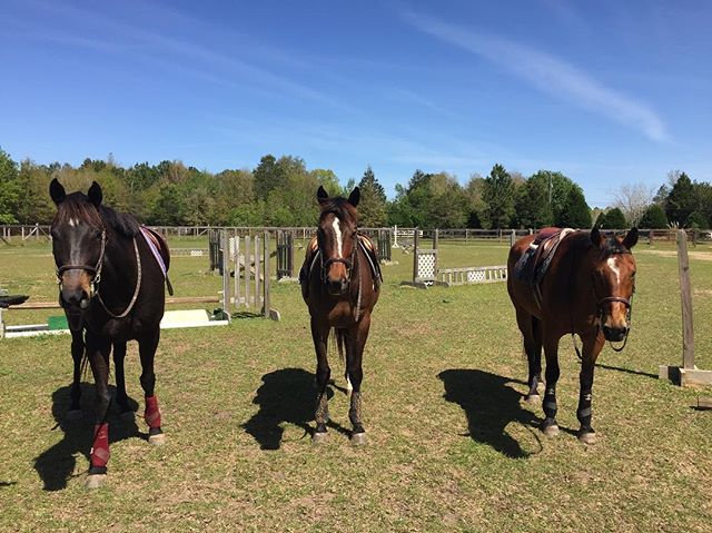 The Bay kids! #thoroughbreds #thoroughbred #ottb #thoroughbredsofinstagram #horse #horses #horsesofinstagram #equine #equestrian #hunterjumper #dressage #pensacola #florida