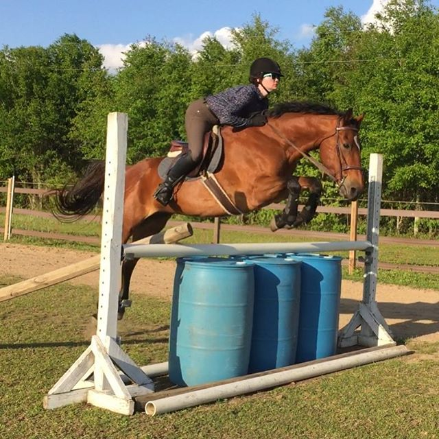 We see you Team Nimbus! #thoroughbred #ottb #horse #horses #horsesofinstagram #hunterjumper #equine #equestrian #pensacola