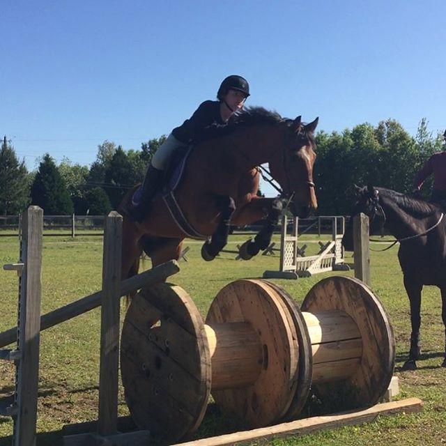 Team Nimbus jumping the wooden spools! #thoroughbred #ottb #horse #horses #horsesofinstagram #equine #equestrian #hunterjumper #bay #gelding #horsegirl #pensacola #florida