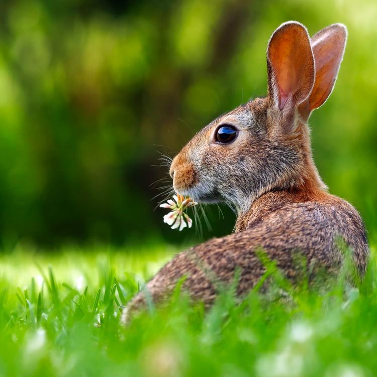 bunny.blog-post-image.jpg
