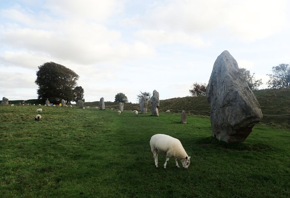 Sheep grazing amongst the Avebury Stone Circles