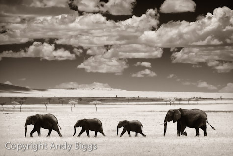 Elephants Clouds