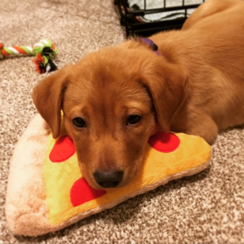 Chowder the dog + pepperoni pizza = ♥