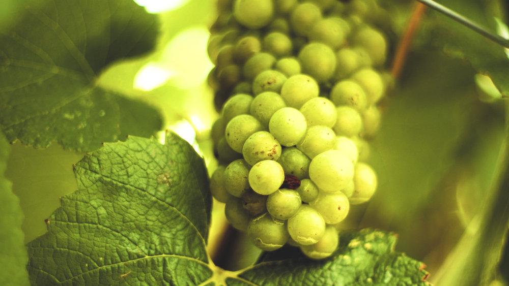 <i>CULTURE</i>California Wine Institute
