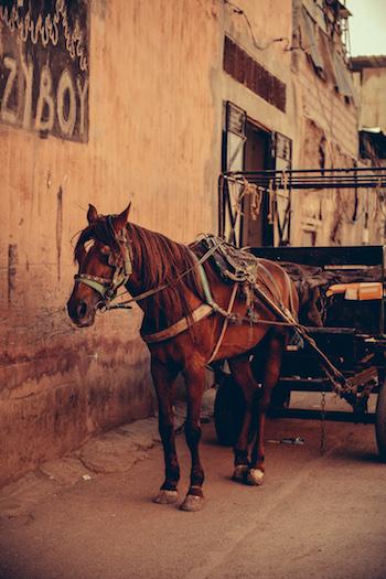 Marrakesh Wedding Photographer Matt Steeves 1.jpg