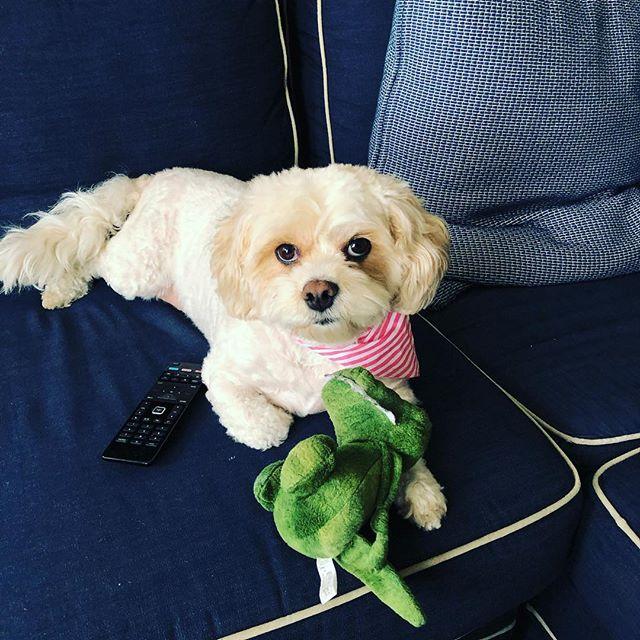 Felt cute might delete never 🥰 . . . #marlowe #thewalkingdog #TWDPC #dogwalker #cutiepie #dogsofjerseycity #bestgirl #dogmodel #jerseycity #dogsofinstagram