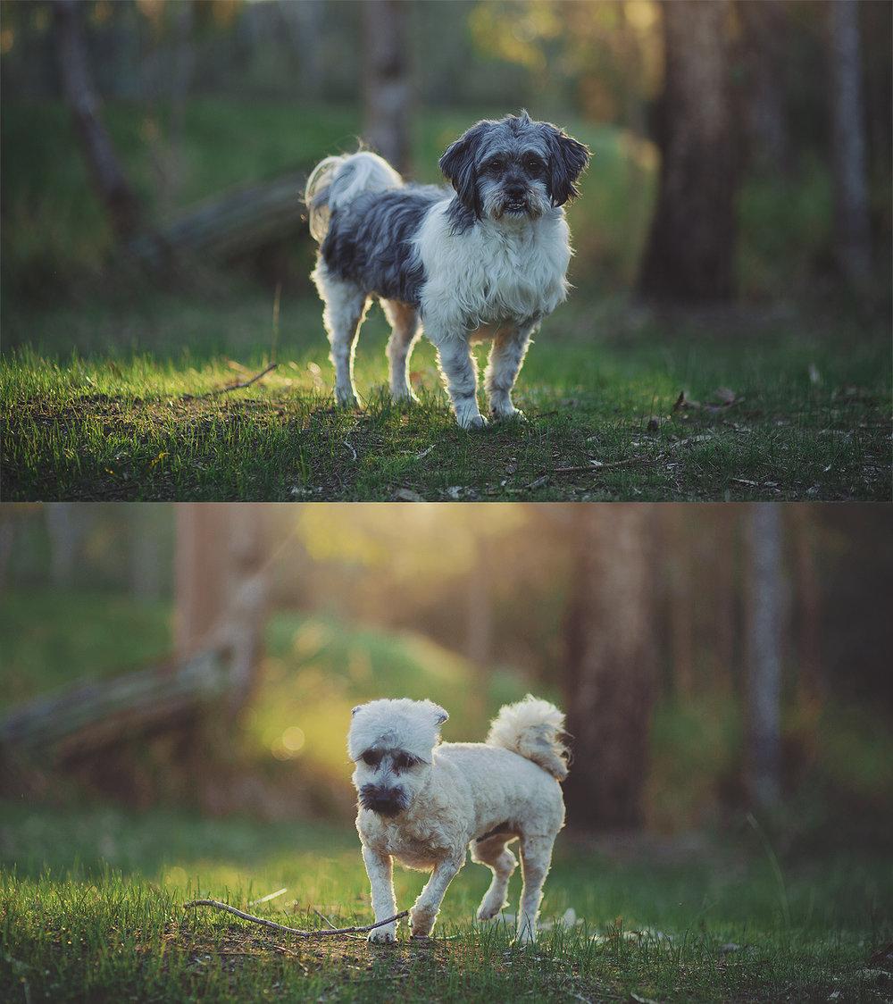 69470-8145166-dogs_web.jpg