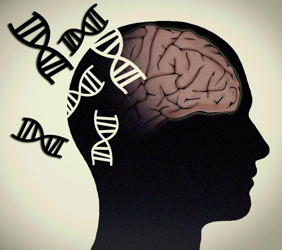 brain-NHGRI.jpg