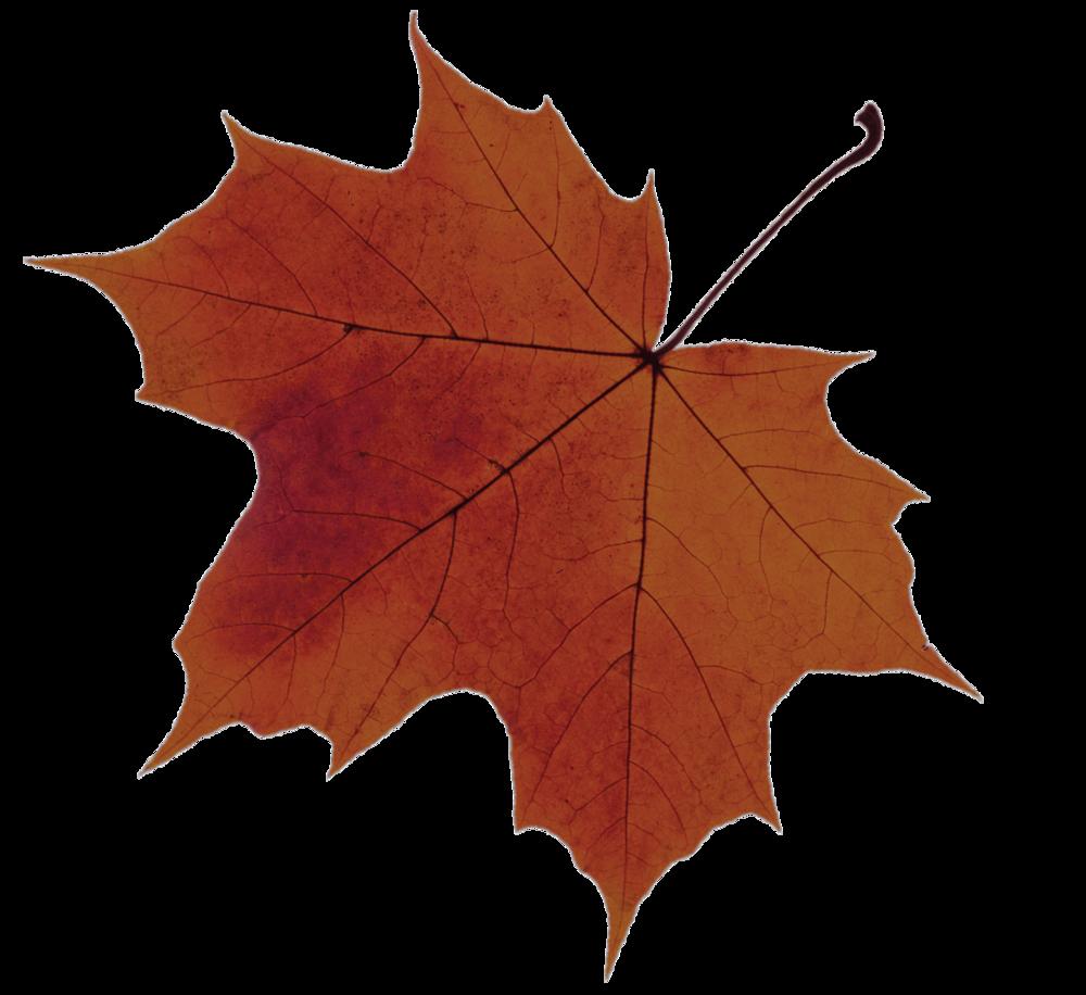 leaf-2_33.png