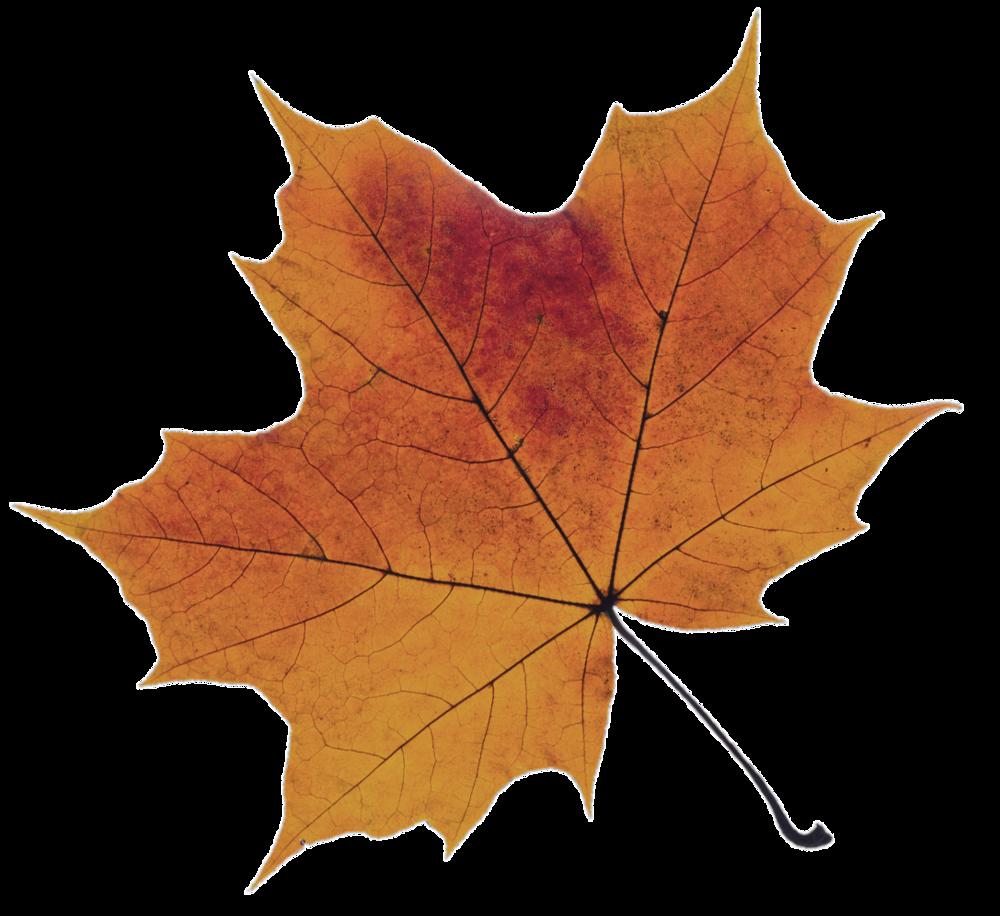 orange-leaf.png