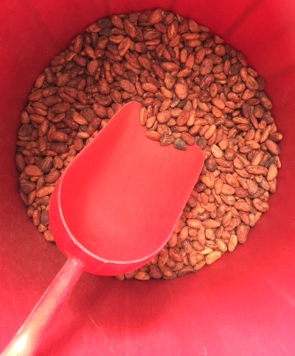 These stunning orangey-red brown beans are an heirloom variety of Colombian cacao,grown by members of the Arhuacos indigenous community in the Sierra Nevada de Santa Marta.