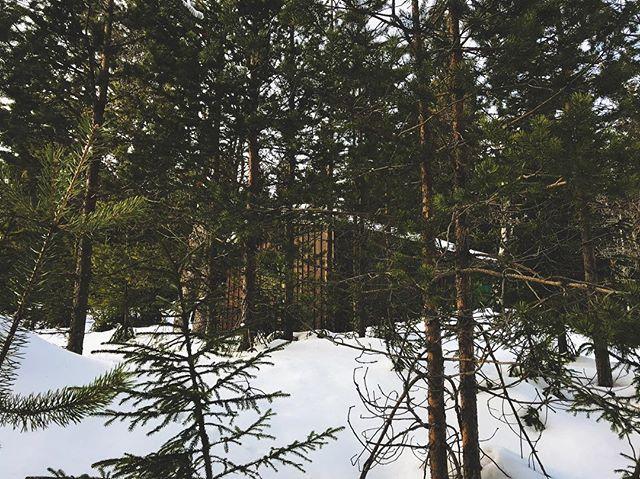 Hidden Cabin.