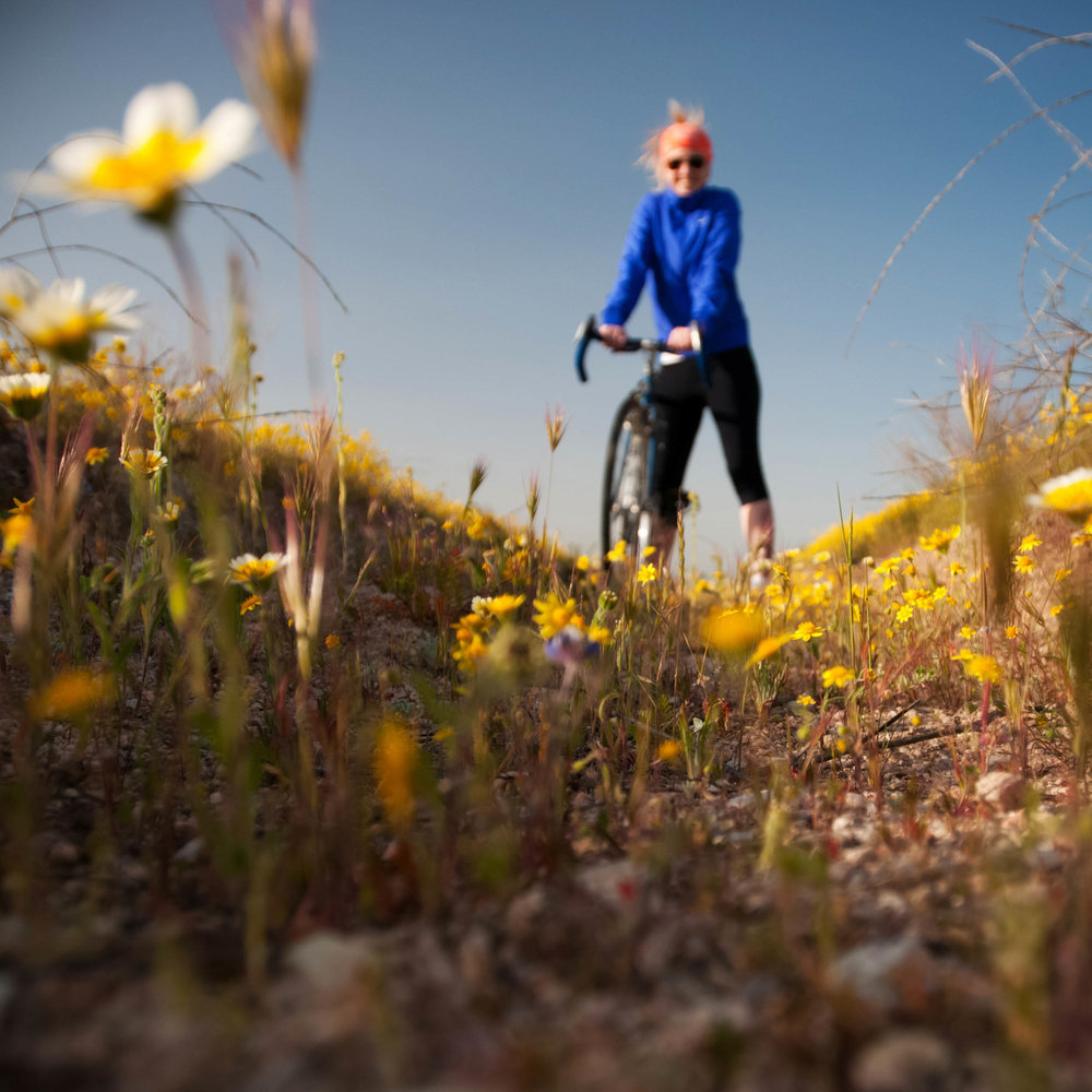kman_cyclery_wildflowers_road_crop_w.jpg