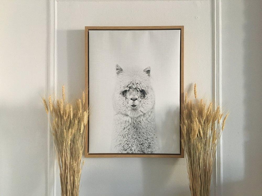 llama artwork