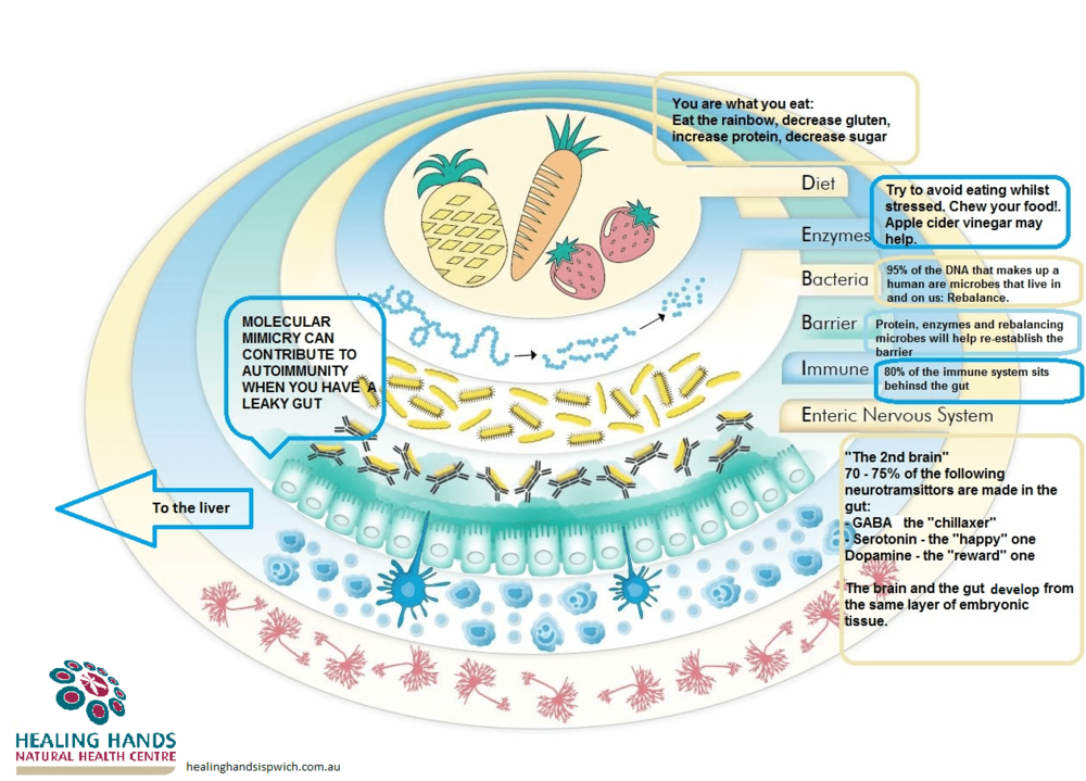 The Complexity of our gut and our microbiome