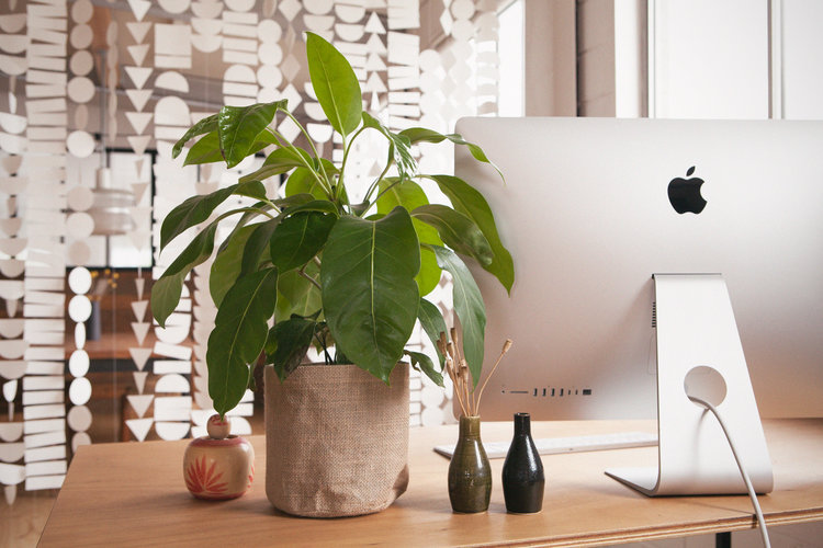 melbourne-corporate-gift-delivery-plants-online.jpg