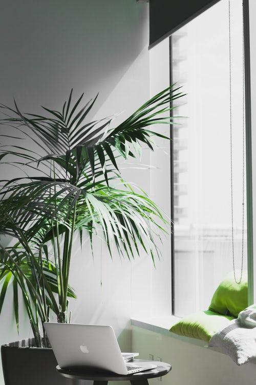 plants-office-1.jpeg