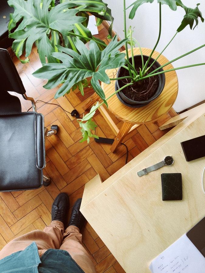 plants-office-3.jpeg