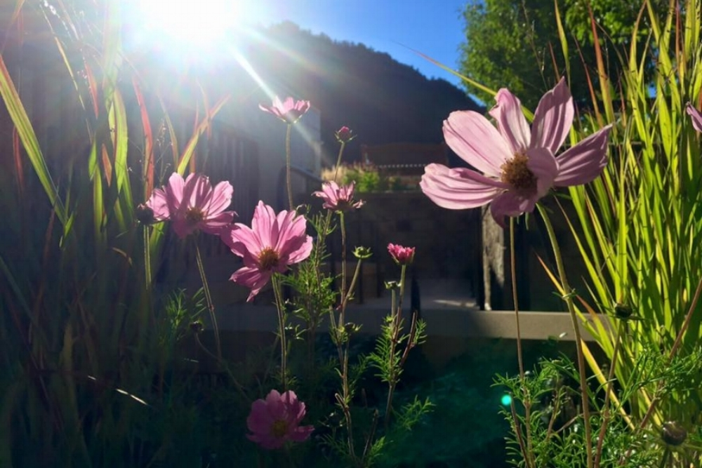 Wildflowers on the rooftop of The Little Nell at Aspen Mountain | Photo credit: Jude Fitzgerald