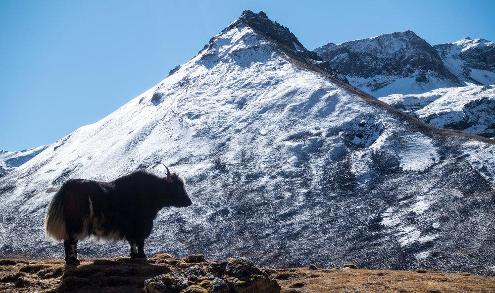 Bhutan 2017-01834.jpg