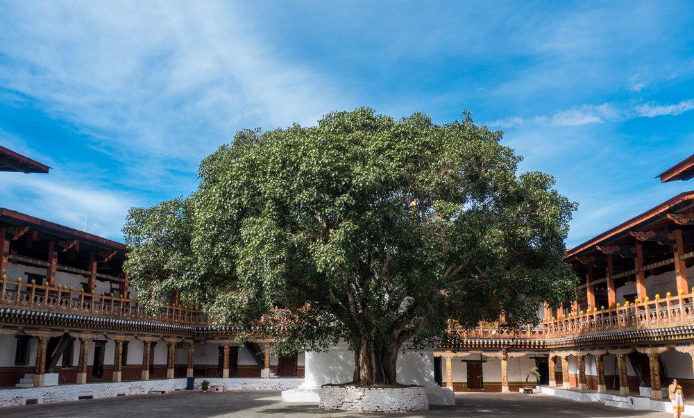 Bhutan 2017-02132.jpg