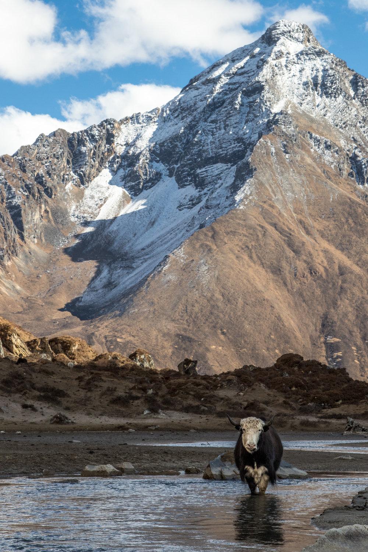 Bhutan 2017-8910.jpg