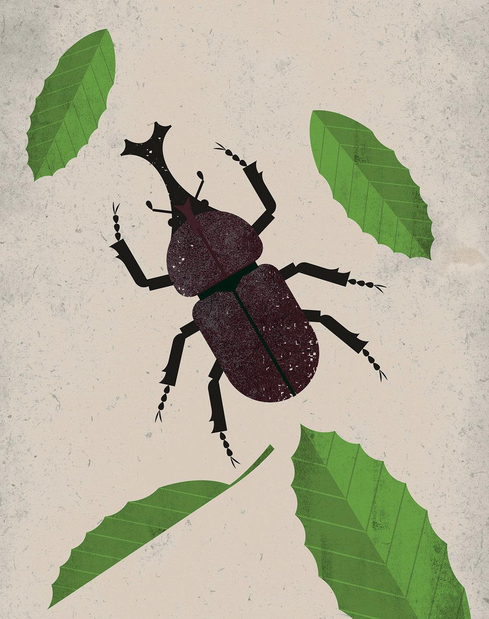 Beetle_01-01_RGB_72.jpg