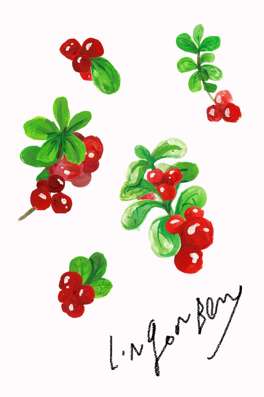 lingonberry_v01.jpg