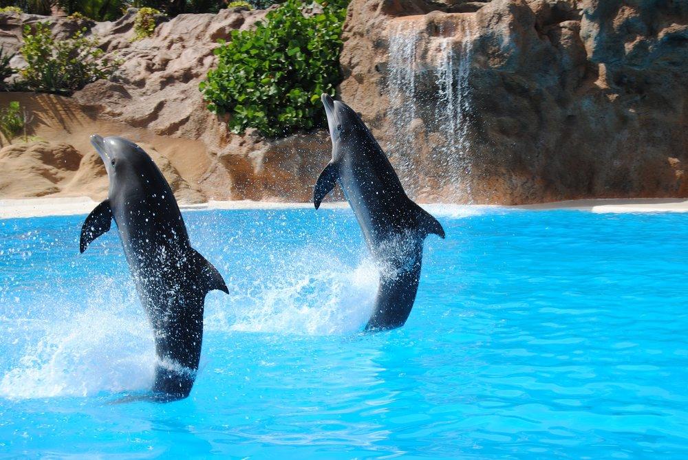 dolphin-1602874_1920.jpg