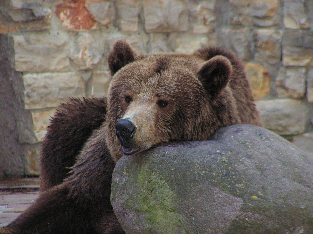 bear-2150060_1920.jpg