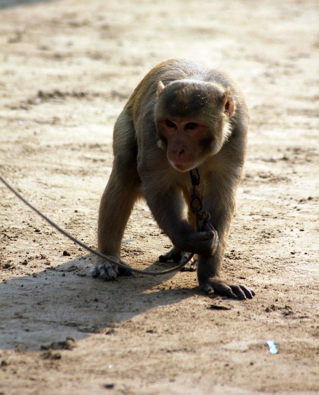 monkey-390477_1920.jpg