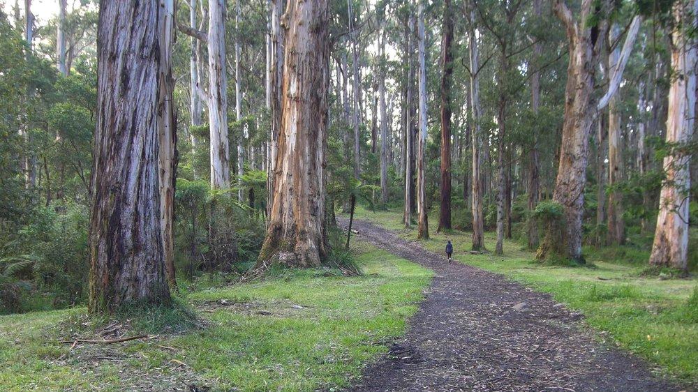 dandedong ranges victoria australia (12 of 12).jpg
