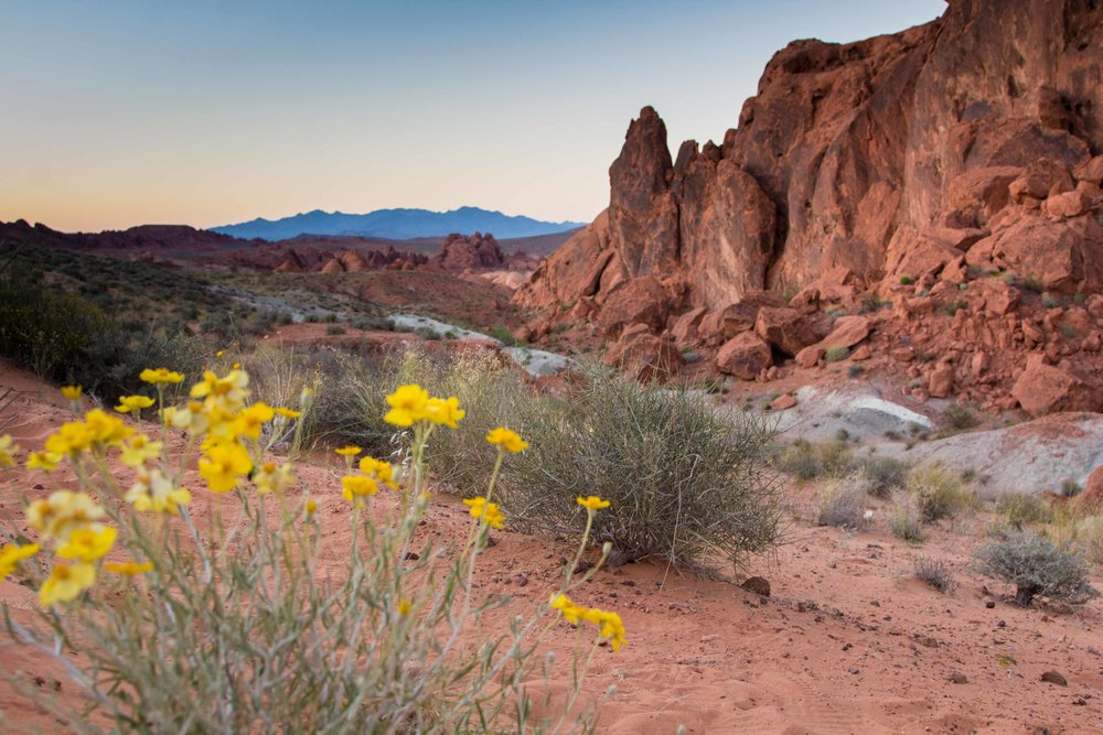 Valley of Fire State Park Nevada  (8 of 11).jpg