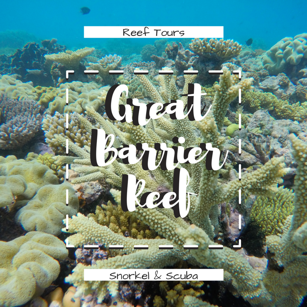 Great Barrier Reef - Mind blowing experience. This reef is so enormous. Find out how we got free scuba. We were beyond stoked that the Great Barrier Reef was our first experience scuba diving. We saw turtles and color changing octopus'