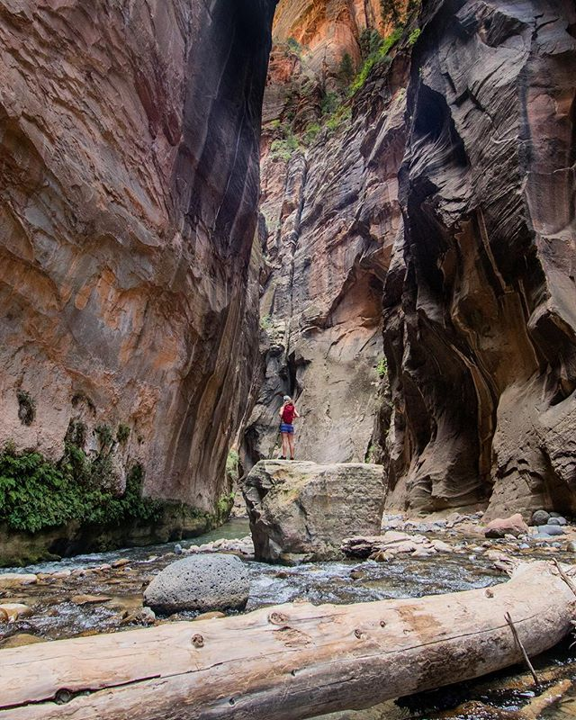 The Narrows are lit AF #utah #zionnationalpark