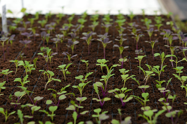 farming-11.jpg