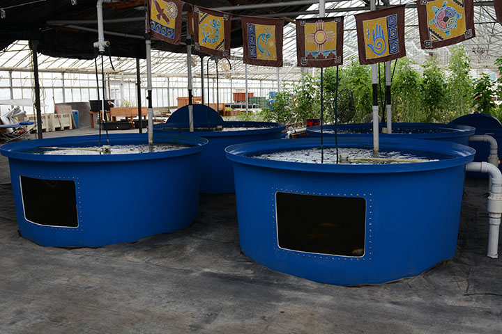 30,000 gallon fishery provides nutrients used to grow crops using aquaponics.