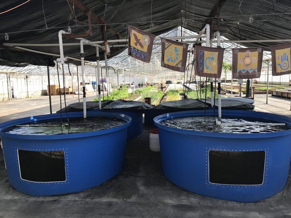 Aquaponic Hybrid System