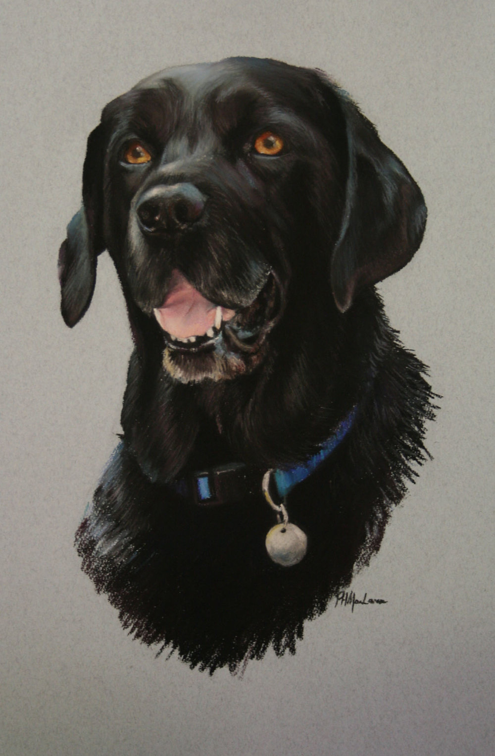 Commission: Black Labrador. Pastel. 42 x 32cm.